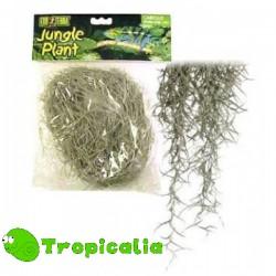Exo Terra Spanish Moss Medium